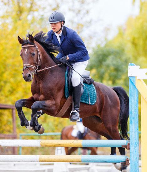 Un panorama de l'équitation