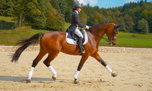 Équitation et dressage
